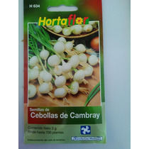 700 Semillas De Cebolla Cambray
