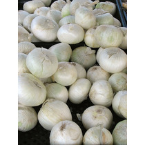 10 Gr Allium Cepa Cebolla Blanca - Sweet Spanish Codigo 479