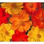 Cosmos Sulphureus Colores Mix 20 Semillas Flor Jardín Sdqro