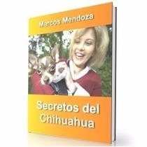 Como Educar A Un Chihuahua - Guía De Adiestramiento Raza