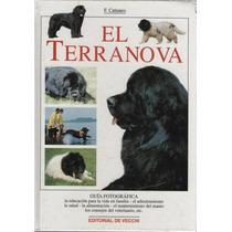 El Terranova. De F. Cattaneo