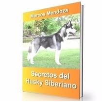 Como Educar A Un Husky Siberiano - Guía De Adiestramiento