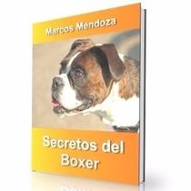 Como Educar A Un Boxer - Guía De Adiestramiento Raza Boxer