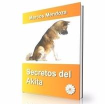 Como Educar A Un Akita - Guía De Adiestramiento Raza Akita