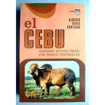 El Cebu Ganado Bovino Para Los Paisajes Tropicales