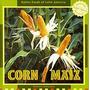 Corn/maiz, Doreen Gonzales