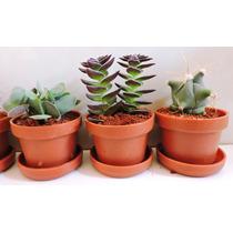 Recuerdos Baby Shower, Plantas Miniatura, Ecofriendly,