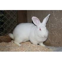 Vendo Bonitos Conejos Para Cria