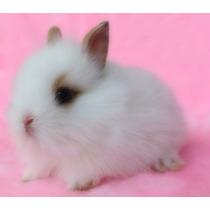 Conejos Enanos Perfectos Para El Dia Del Niño