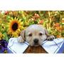 Ravensburger Cachorro Picnic 150 Piezas Puzzle