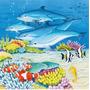 Mundo De Delfines 3 Rompecabezas 49 Piezas Ravensburger