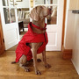 Abrigos Para Perro