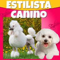 Estetica Canina Profesional 2015 Libros Y Videos Paso A Paso