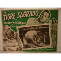 Johnny Weissmuller, El Tigre Sagrado , Cartel ( Lobby Card )
