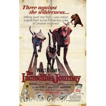 Poster (28 X 43 Cm) The Incredible Journey