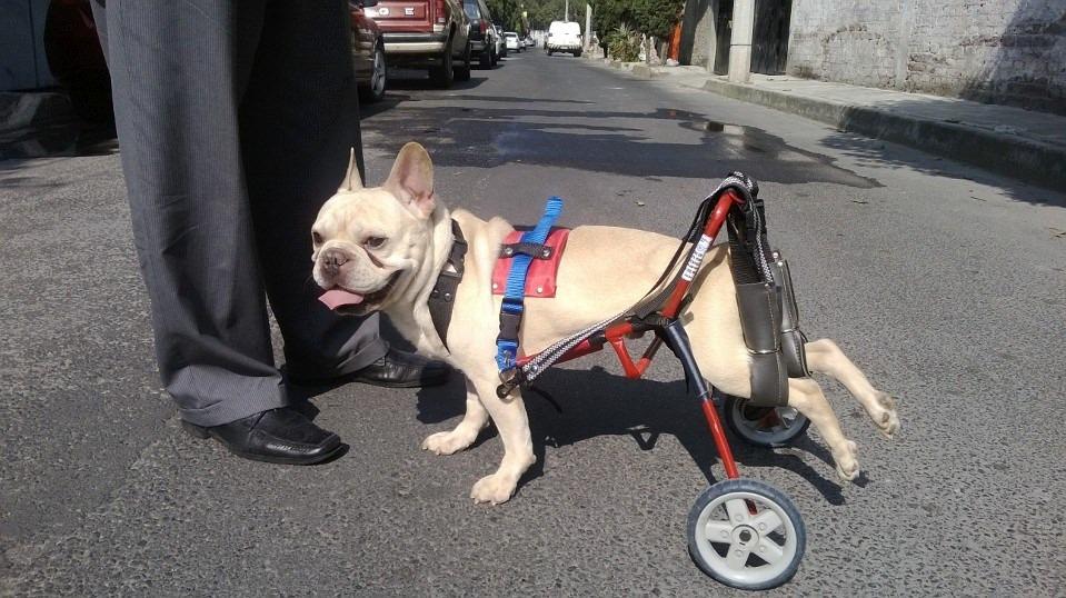 Silla de ruedas para perro discapacitado displasia de for Sillas para perros