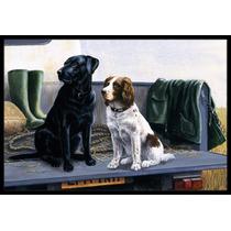 En El Portón Trasero Labrador Y Perro De Aguas Interiores O
