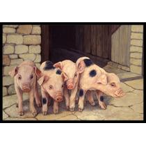 Cerdos Lechones De Daphne Baxter Mat Interiores O Exteriores