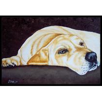 La Siesta Labrador Amarillo Mat Interiores O Exteriores De 2