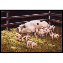 Cerdos Lechones En La Cena Tiempo Mat Interiores O Exteriore