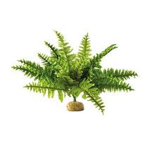 Exo Terra Plantas Medianas Orquidea, Helecho, Arbusto Med.