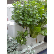 Jard n vertical huerto vertical muro verde hortalizas for Jardin vertical mercadolibre