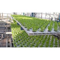 Agrolita (perlita) Cultivo En Hidroponia, Germinación Fpd