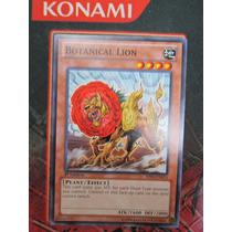 Yugioh 3x Botanical Lion Comun 1st Bp02-en074