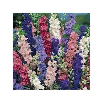 Delphinium larkspur mix 10 semillas jardiner a sdqro en for Jardineria queretaro