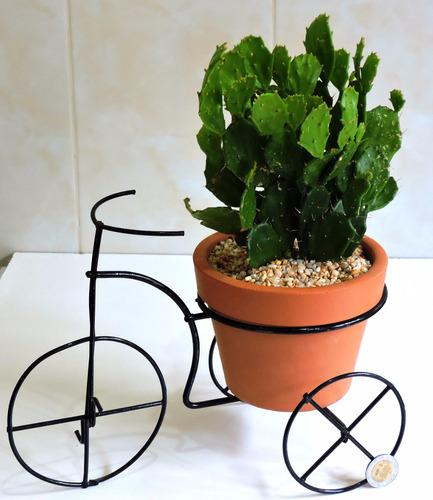 Plantas De Interior, Plantas Para Oficina, Adorno Oficina en venta ...